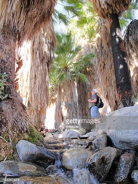 Desert oasis near Palm Springs, California