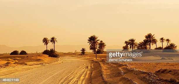 desert oasis sunset - bernd schunack stock photos and pictures