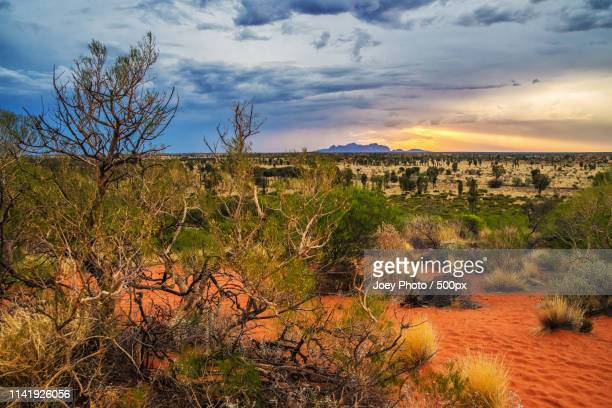 desert on fire - uluru stock pictures, royalty-free photos & images
