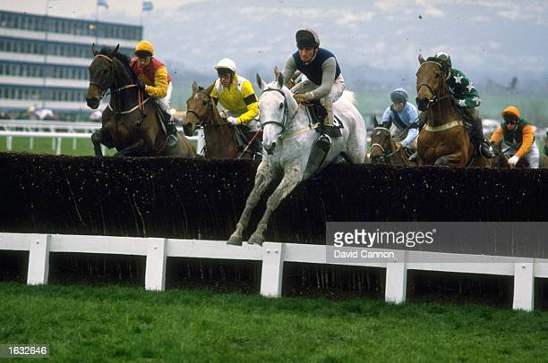 Desert Orchid jumping a fence and going on to win the Cheltenham Gold Cup race at Cheltenham racecouse England Mandatory Credit David Cannon/Allsport