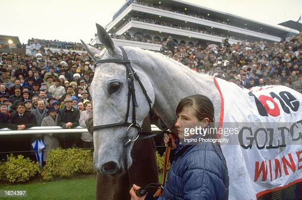 Desert Orchid parades round the winners enclosure after winning the Cheltenham Gold Cup at Cheltenham racecourse in Chelteham England Mandatory...