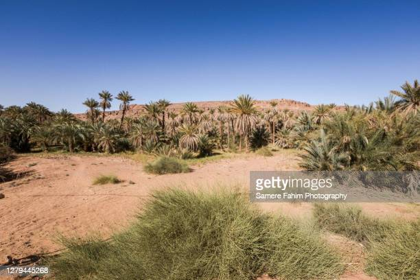 a desert palm grove - 2016 stock pictures, royalty-free photos & images
