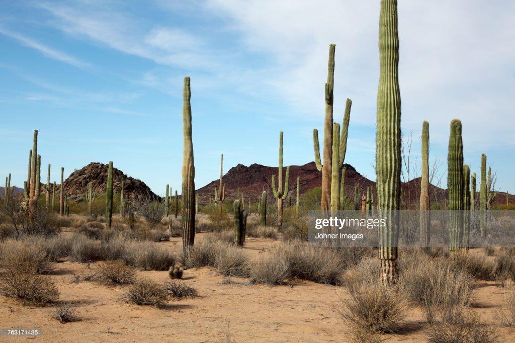 Desert : Foto de stock