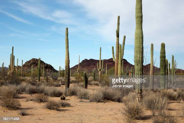 desert - mexico stock pictures, royalty-free photos & images