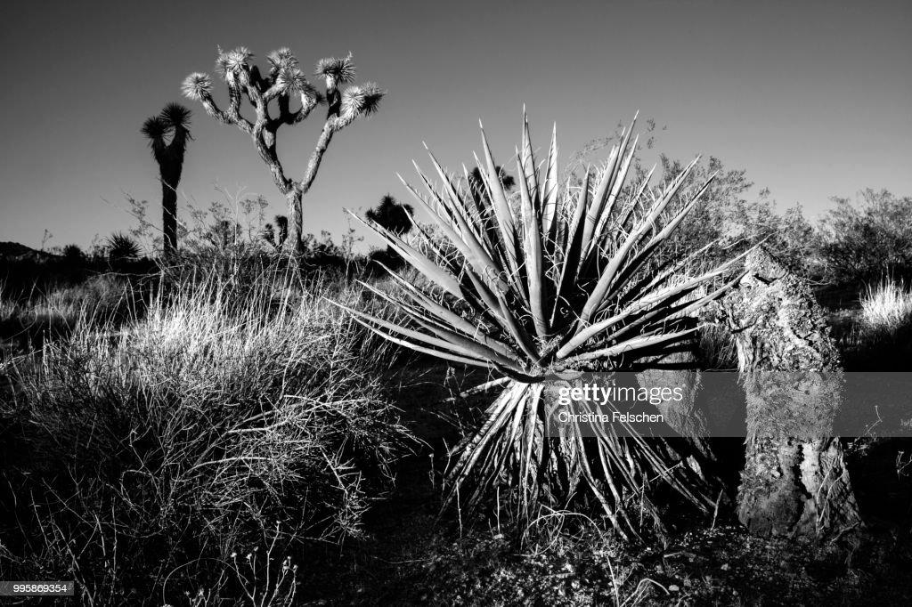 Desert : Stock Photo