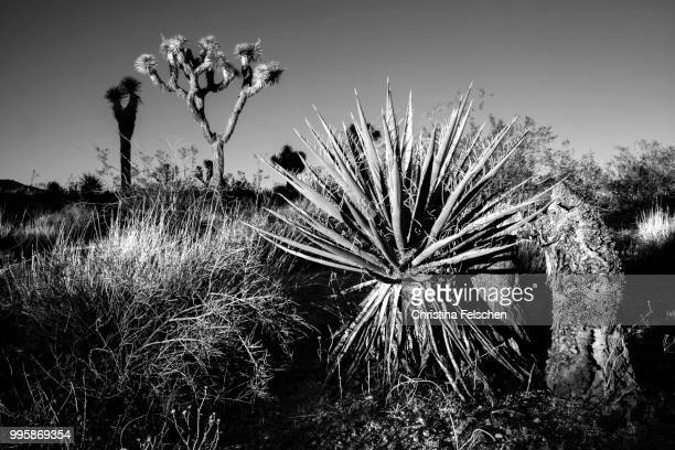 desert - christina felschen stock photos and pictures