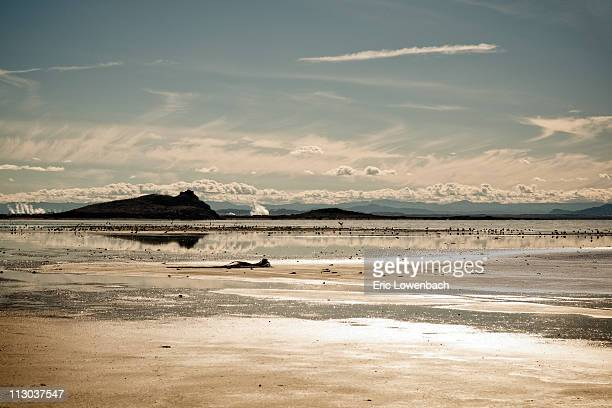 desert reflections - lowenbach stock photos and pictures