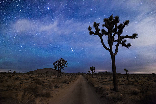 A Desert Road And Joshua Trees At Night Wall Art