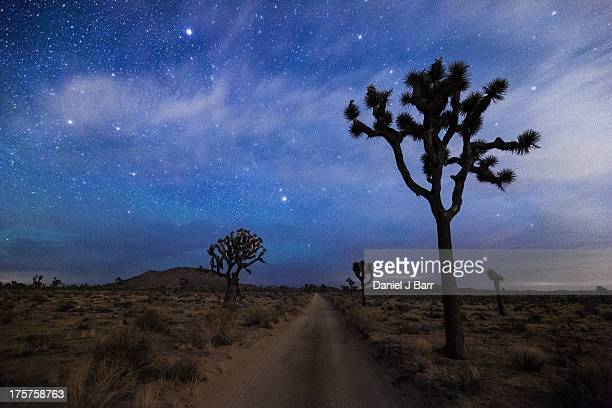 a desert road and joshua trees at night - joshua tree stock photos and pictures