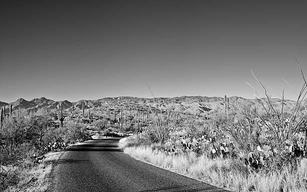 Desert Road Wall Art