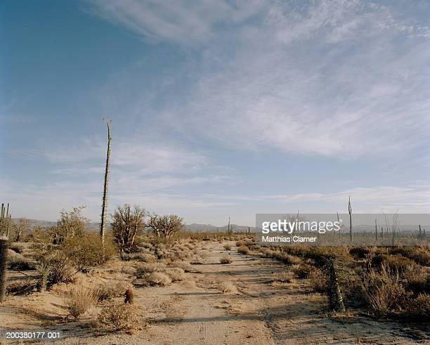desert road - halbinsel niederkalifornien stock-fotos und bilder