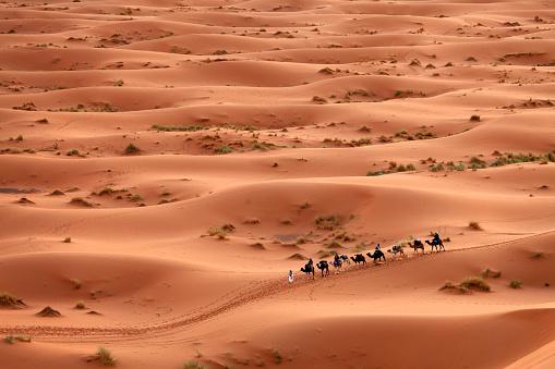Desert Sahara, Camel Ride Caravan, Enjoying and happy People - gettyimageskorea