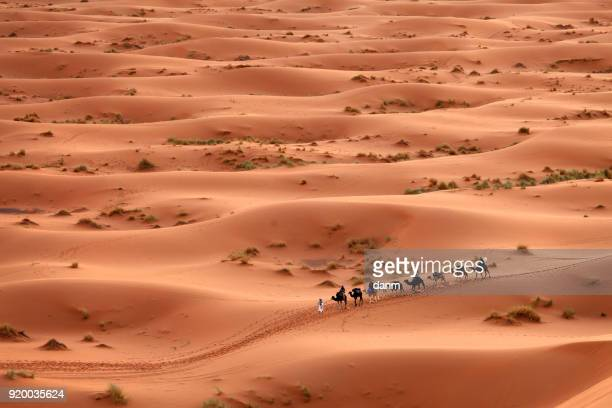 desert sahara, camel ride caravan, enjoying and happy people - egypt stock pictures, royalty-free photos & images