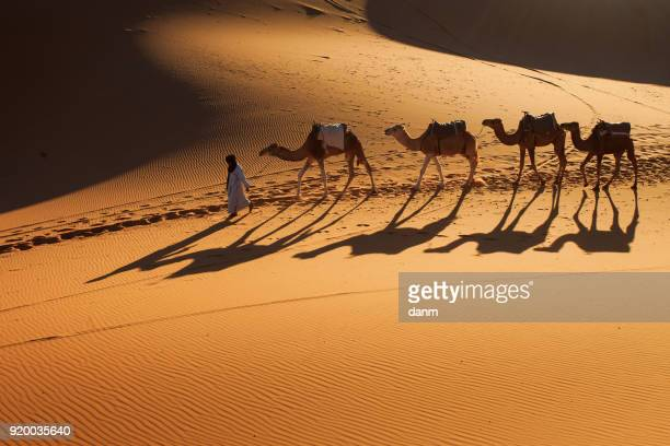 desert sahara, camel ride caravan, enjoying and happy people - camel train stock pictures, royalty-free photos & images