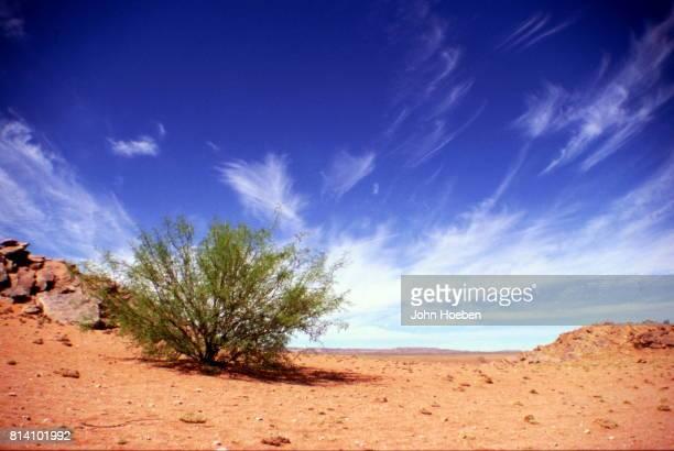 desert scene - ナマクワランド ストックフォトと画像