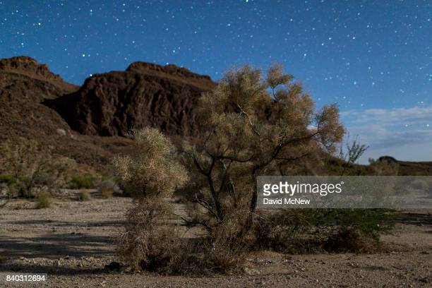 A desert smoke tree is illuminated by halfMoon light in the Trilobite Wilderness region of Mojave Trails National Monument on August 27 2017 near...