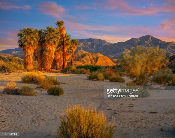 desert spring  in anza borrego desert state park, ca - anza borrego desert state park stock pictures, royalty-free photos & images