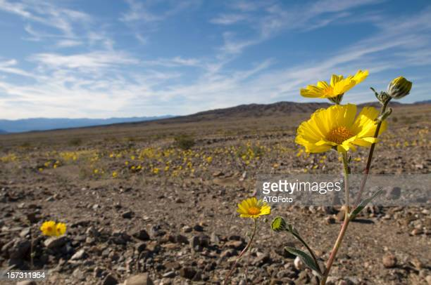 Desert Spring with Yellow Flowers