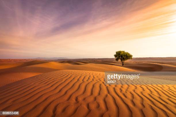 desert sunset - extreme terrain stock pictures, royalty-free photos & images