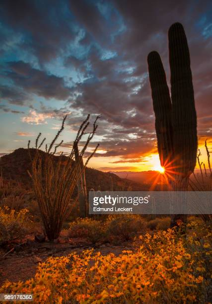 Desert Sunset, Saguaro National Park, Arizona