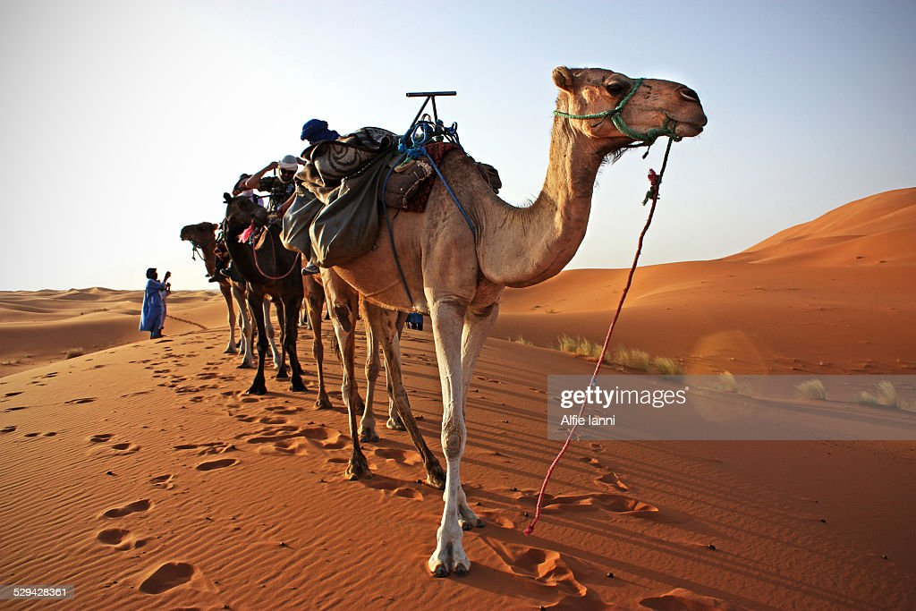 Desert Tour : Stock Photo