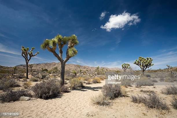 desert trail - joshua tree stock photos and pictures