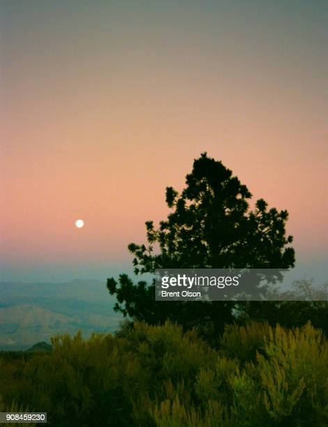 desert tree - lone pine california stock pictures, royalty-free photos & images