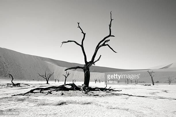desert trees - kale boom stockfoto's en -beelden