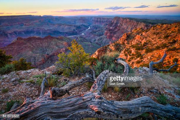 desert view sunset - don smith stock pictures, royalty-free photos & images