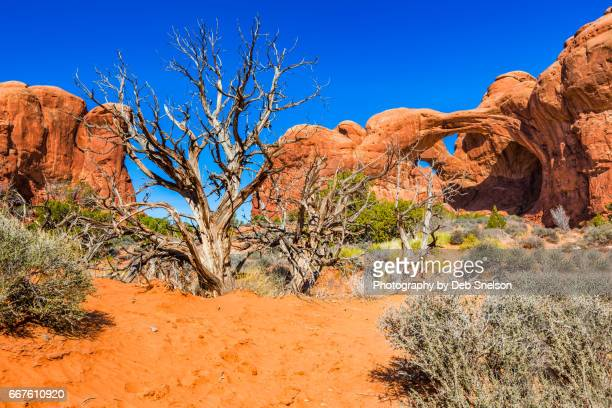 desert view with double arch - double arch stock pictures, royalty-free photos & images