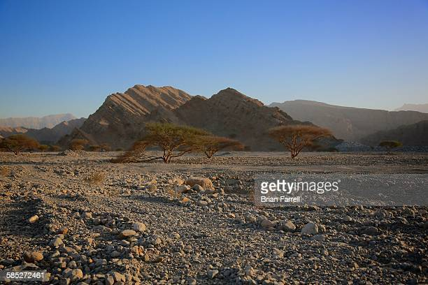 desert wadi trees - ras al khaimah stock pictures, royalty-free photos & images