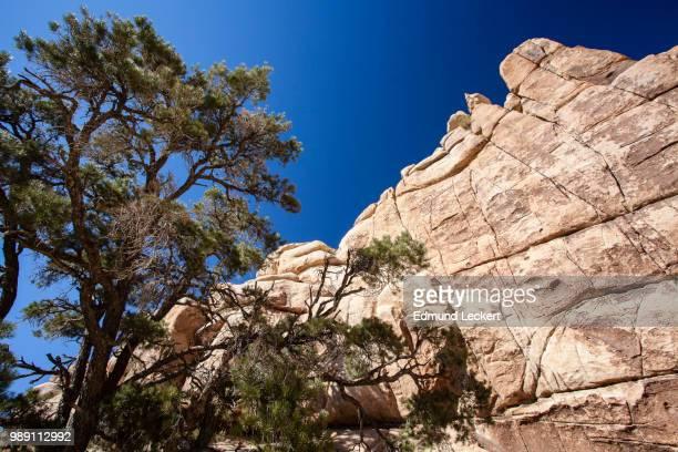 desert wall, joshua tree national park, california - leckert stock pictures, royalty-free photos & images