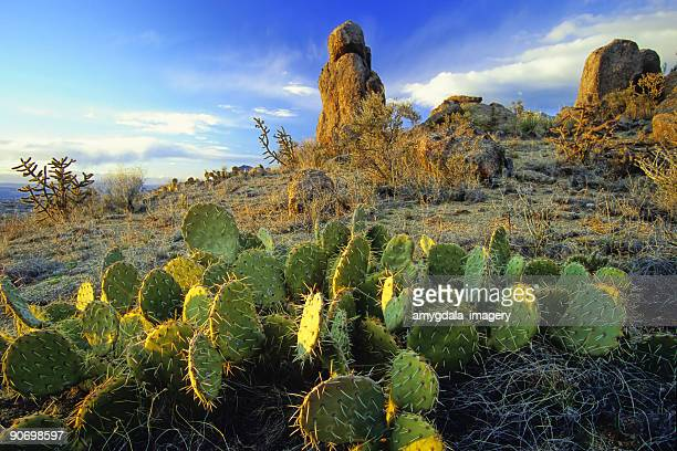 Desierto de cactus y formación de roca paisaje de la puesta del sol