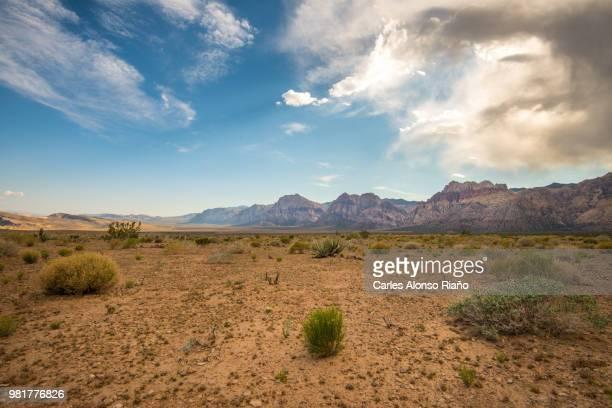 desert with cliffs in background, red rock canyon national conservation area, las vegas, nevada, usa - nevada stock-fotos und bilder