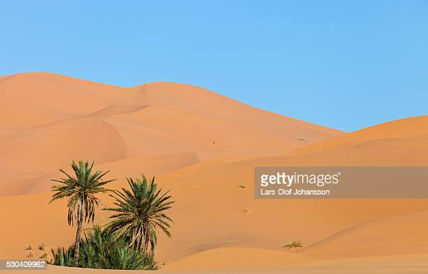Desert with palm trees in Morocco