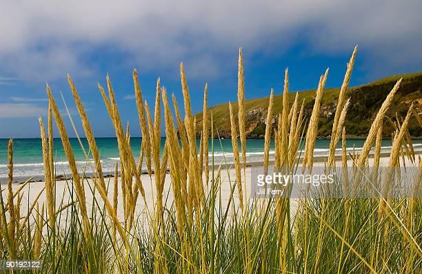 Deserted beach viewed through seagrass
