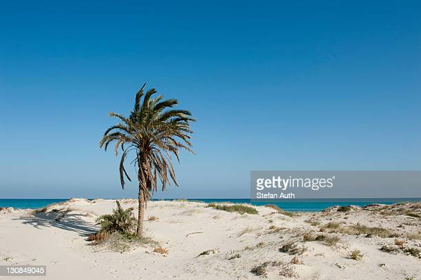deserted beach with palms, white sand, island of djerba, tunisia, maghreb, north africa, africa - djerba stock pictures, royalty-free photos & images