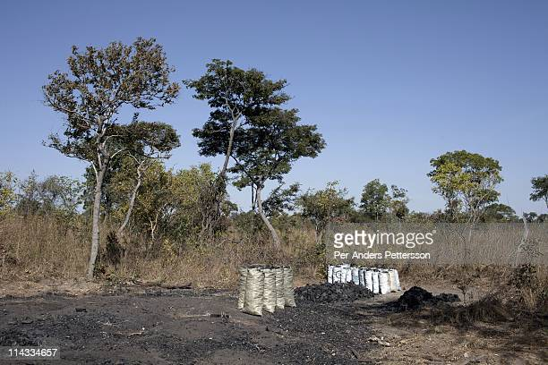 A deserted charcoal production area on June 17 2010 about 100 kilometers outside Lusaka Zambia The workers ran away when out cars were approaching...