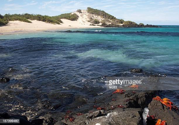 Einsames Galapagos beach