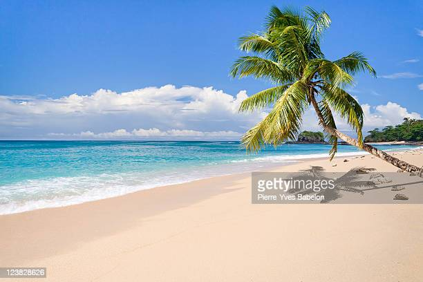 deserted island - palm tree stock pictures, royalty-free photos & images