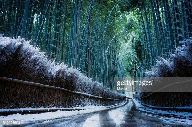 deserted snowy bamboo path near Arashiyama
