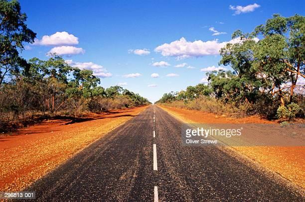 deserted tree-lined road,queensland australia - descrição geral - fotografias e filmes do acervo