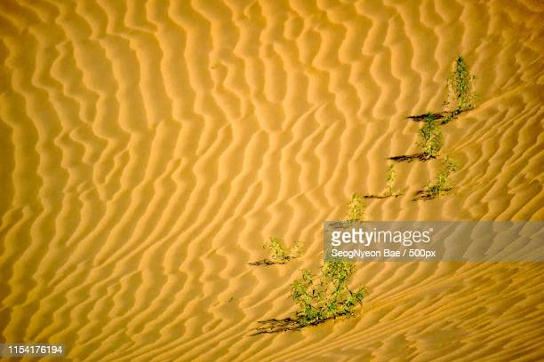 desert-grown nameless weed - baotou stock pictures, royalty-free photos & images