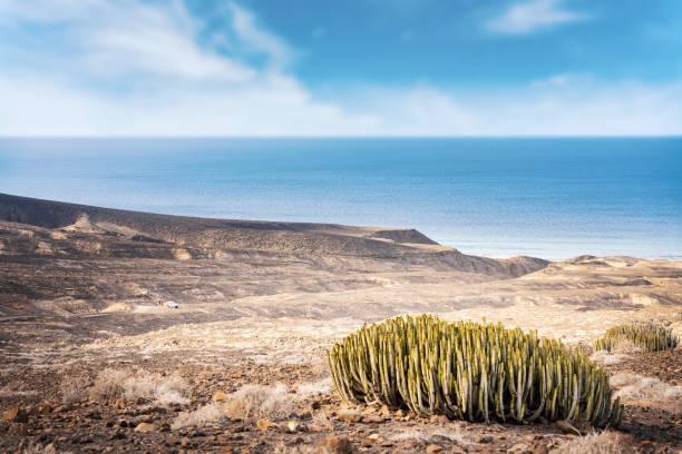 Desertic landscape, cactus and ocean sea in background. Cofete, Fuerteventura, Canary Islands