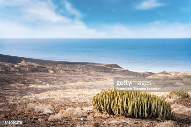 desertic landscape, cactus and ocean sea in background. cofete, fuerteventura, canary islands - francesco riccardo iacomino spain foto e immagini stock