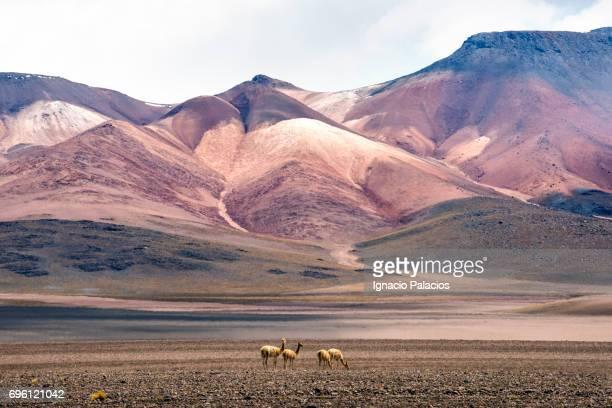 desierto siloli, seven hills mountain, bolivian altiplano - altiplano stock pictures, royalty-free photos & images