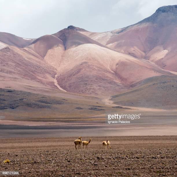 Desierto Siloli, seven hills mountain, Bolivian Altiplano