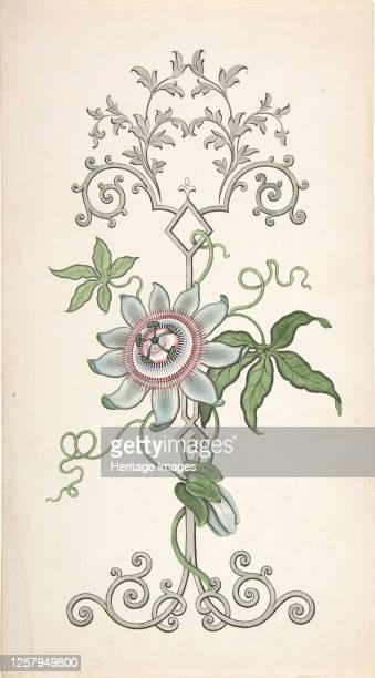 Design for Panel Decoration Centered on a Passion Flower, 1828-40. Artist J Hulme.
