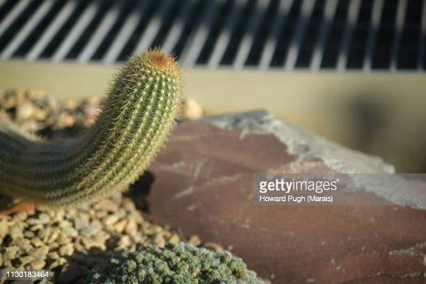 Design in South American Cacti