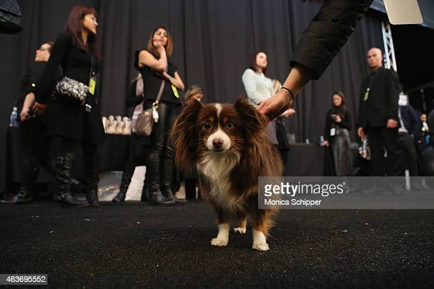 Designer Naeem Khan's dog India backstage at the Naeem Khan fashion show during MercedesBenz Fashion Week Fall 2015 at The Theatre at Lincoln Center...